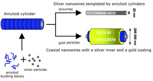 Building amyloid polymers as templates for nanowires (Credit: Adapted from Angewandte)