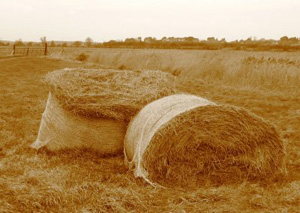 Wasted hay bails could reverse global warming (Photo by David Bradley)